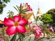 Chiang Mai, Tailandia | Descubriendo el mundo con Anna36