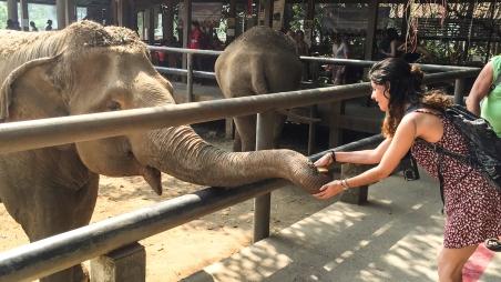 Elephant Nature Park, Tailandia | Descubriendo el mundo con Anna1