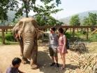 Elephant Nature Park, Tailandia | Descubriendo el mundo con Anna11