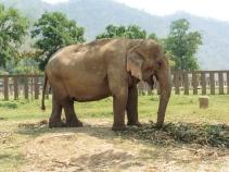 Elephant Nature Park, Tailandia | Descubriendo el mundo con Anna13