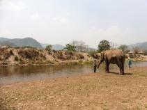 Elephant Nature Park, Tailandia | Descubriendo el mundo con Anna15