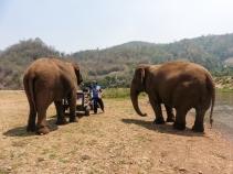 Elephant Nature Park, Tailandia | Descubriendo el mundo con Anna16