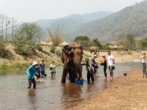 Elephant Nature Park, Tailandia | Descubriendo el mundo con Anna17