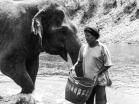Elephant Nature Park, Tailandia | Descubriendo el mundo con Anna18