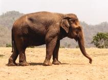 Elephant Nature Park, Tailandia | Descubriendo el mundo con Anna20