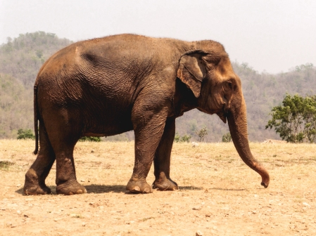 Elephant Nature Park, Tailandia | Descubriendo el mundo con Anna20.jpg
