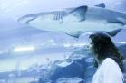 Aquarium Dubai Mall, Dubai   Descubriendo el mundo con Anna5