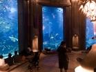 Atlantis Palm, Dubai   Descubriendo el mundo con Anna7