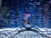 Atlantis Palm, Dubai   Descubriendo el mundo con Anna8