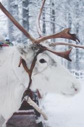 Lapland | Descubriendo el mundo con Anna23