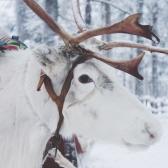 Lapland   Descubriendo el mundo con Anna23