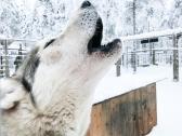 Laponia | Descubriendo el mundo con Anna8