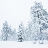 Rovaniemi, Laponia   Descubriendo el mundo con Anna4