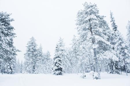 Rovaniemi, Laponia | Descubriendo el mundo con Anna4