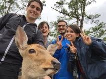 Ciervos en Nara, Japón | Descubriendo el mundo con Anna15