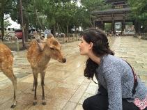 Ciervos en Nara, Japón   Descubriendo el mundo con Anna2