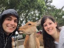 Ciervos en Nara, Japón   Descubriendo el mundo con Anna3