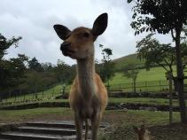 Nara, Japón | Descubriendo el mundo con Anna21