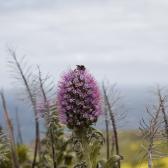 Norte de Porto Santo, Madeira | Descubriendo el mudno con Anna8